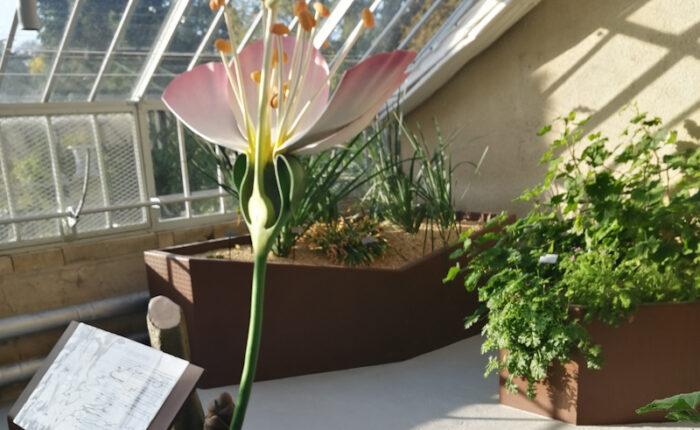 Sculpture de fleur surdimensionnée - Jardin des Plantes de Rouen