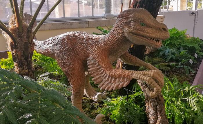 Sculpture de restitution d'un vélociraptor à plumes - Taille réelle